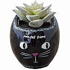 CAT FAUX SUCCULENT